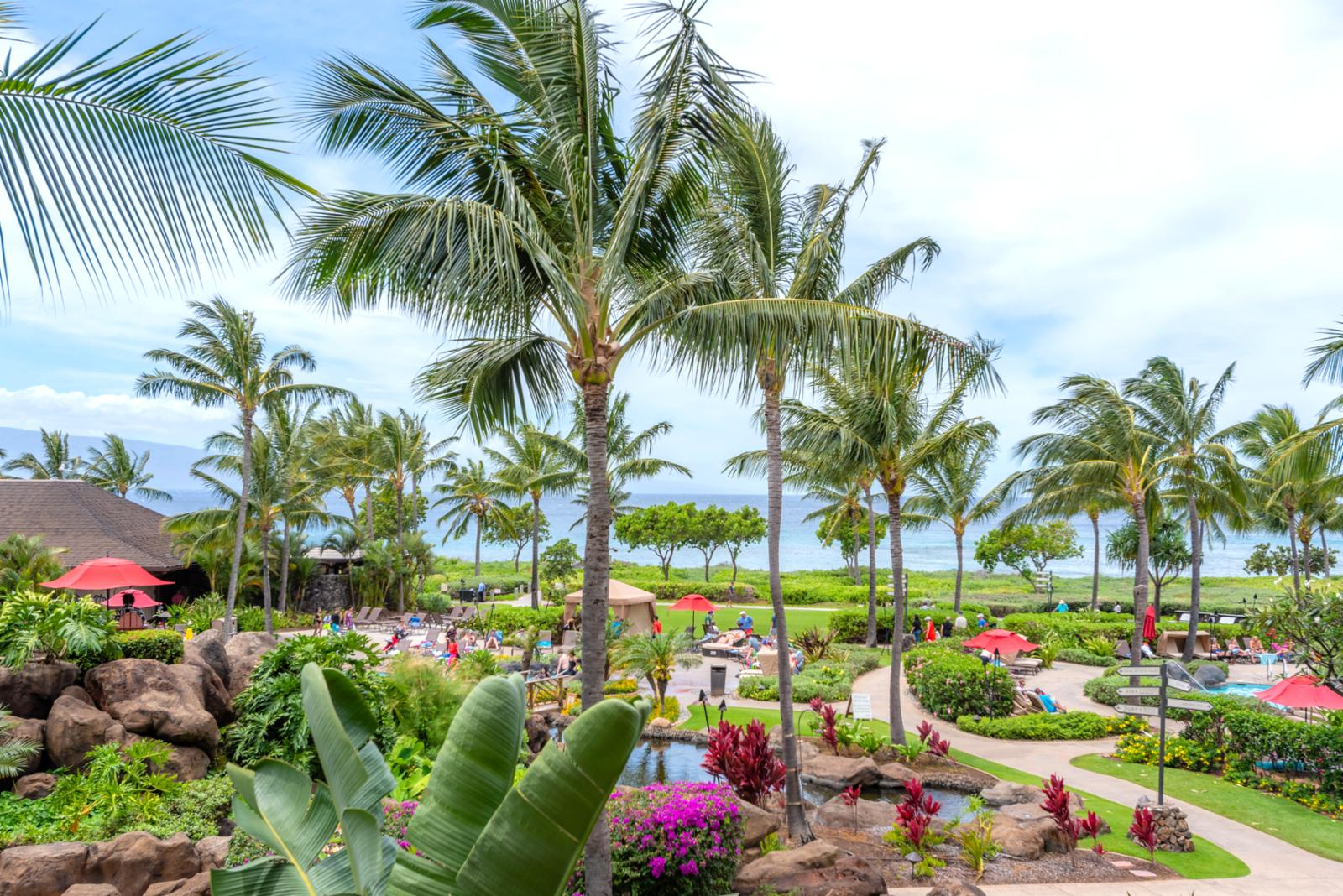 Natural vegetation landscaped throughout the resort
